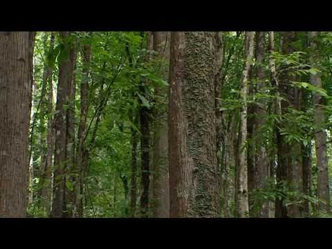 Forest regeneration in the Philippines