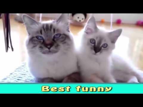 Забавные и смешные приколы с животными