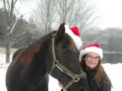 Christmas Horse, Velvet