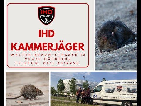 Bekämpfung von Ratten in der Kanalisation | IHD Kammerjäger  0911 4319950