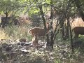Ranthambore National Park.