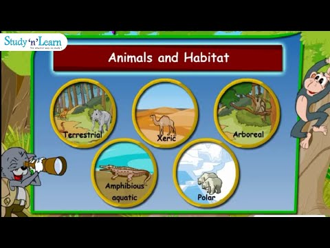 Adaptations in Animals