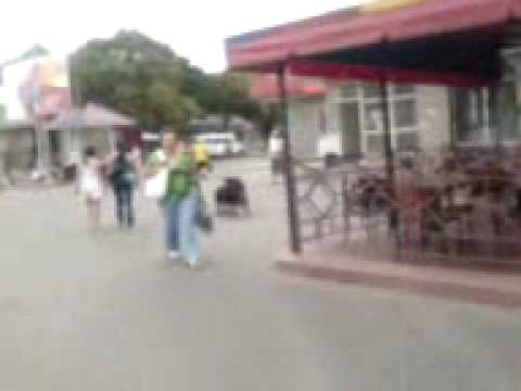 Fucking Dogs In A Town's Center (ukraine).3gp video