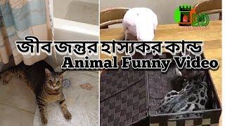 পোষা জীবজন্তুর হাস্যকর সব কান্ড।Animal Funny Videos।BD Troll Maza