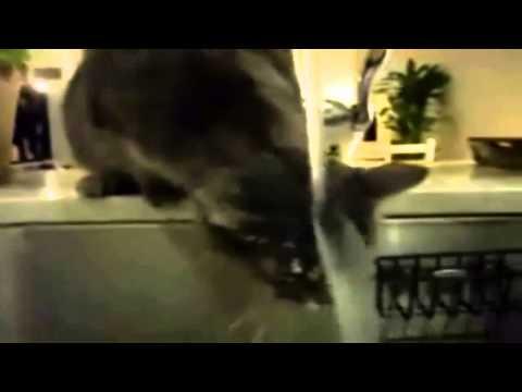 gatti pazzi compilation ita