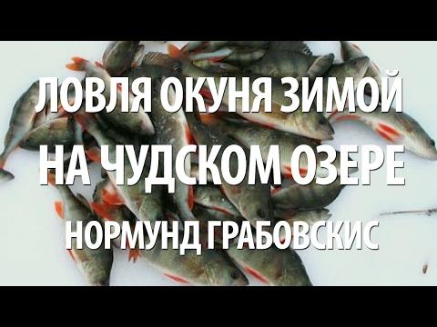 ловля на блесну окуня на чудском озере