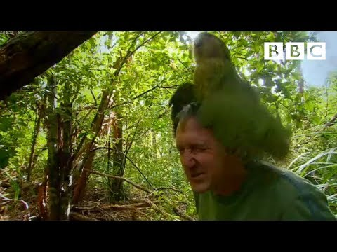 Shagged By A Rare Parrot - Last Chance To See - Bbc Two video