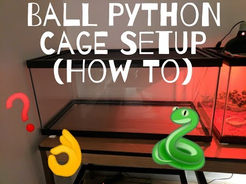 Ball Python Cage Setup 40 Gallon (How I Setup my Tanks)