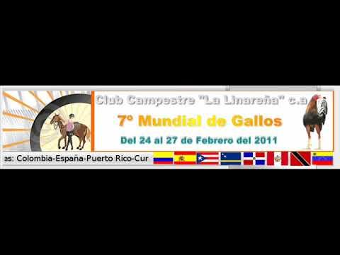 FG  Galleros de Venezuela - Ramón Castillo