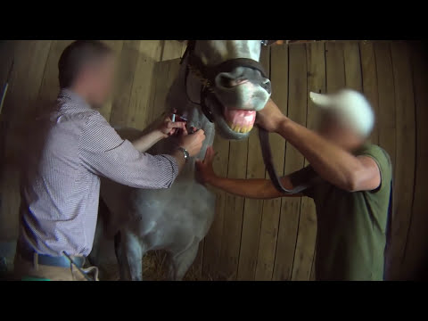 Horse Racing Exposed: Drugs and Death