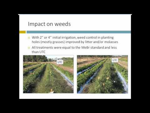 A Novel Strategy for Soil-borne Disease Management: Anaerobic Soil Disinfestation (ASD) Webinar