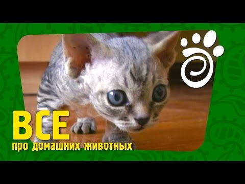 котят молоком прикормка