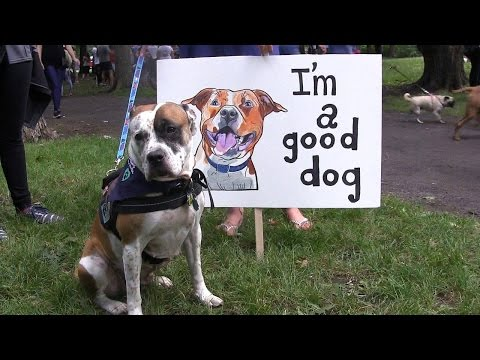 Montreal dog lovers protest pit bull bans