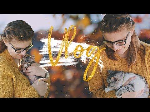 Просто красивое видео. Осень и котики. #Недовлог