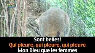Watch Francis Cabrel Animal video