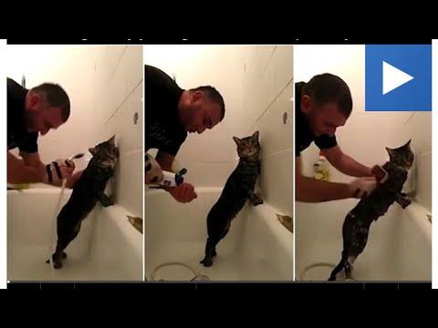 ご主人に体を洗ってもらうのが好きな猫