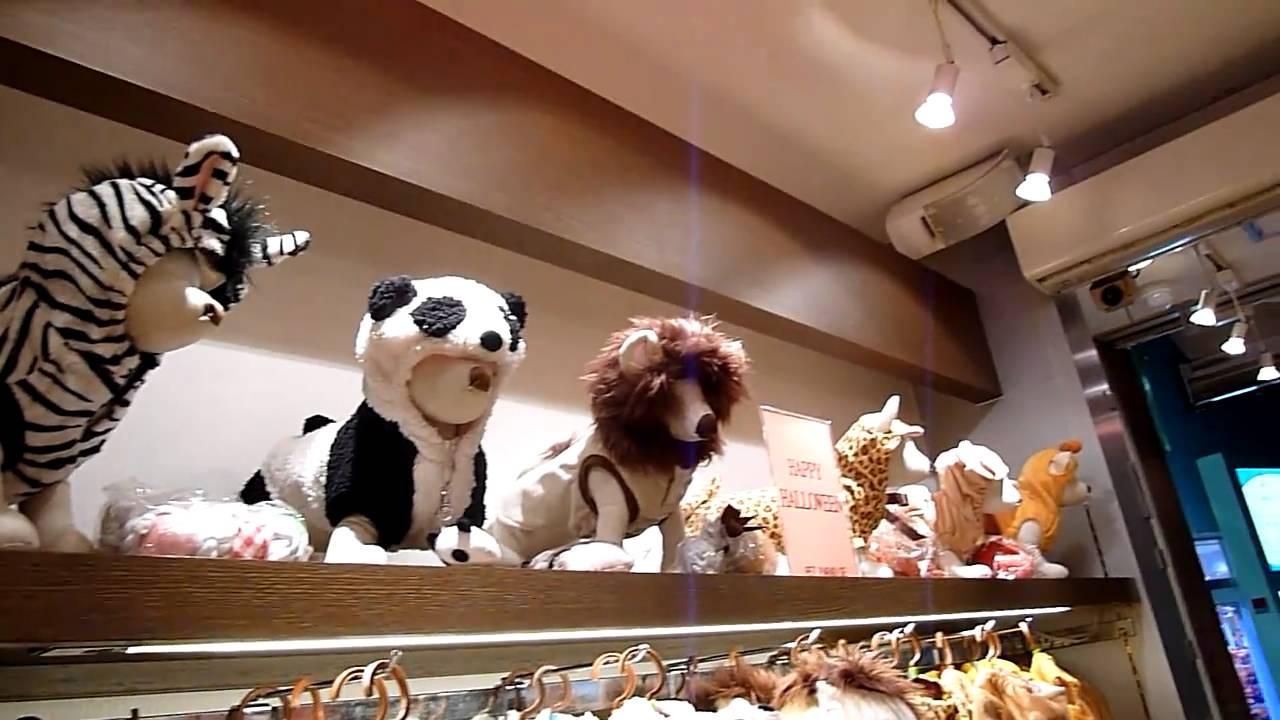 Pet Shop Tokyo Pet Shop em Harajuku Tokyo