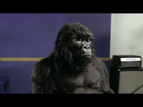 Cadbury Gorilla You re the Voice (Official Version)
