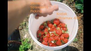 35mm- Strawberry Picking with Dakota RZ-2000 using Kodak 400 UltraMax