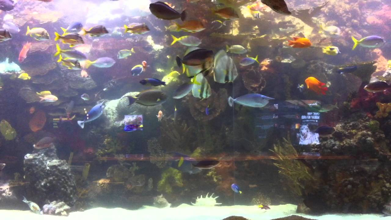 Huge aquarium from the hotel mirage in las vegas 20 000 for Fish tank las vegas
