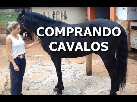 Dicas simples para comprar um cavalo