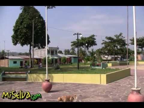 Cacatachi en Tarapoto - Perú