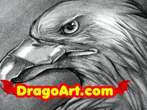 Sketching an Eagle Head   Eagle Head Sketch