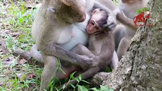 Why big monkey do like this with baby monkey?, What baby monkey doing?, Monkey Camp part 807