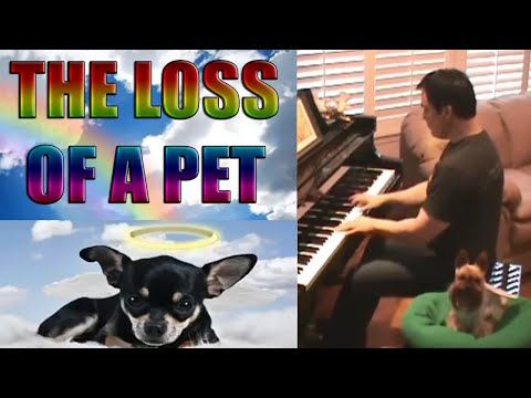 Rainbow Bridge for Lost Dogs & Cats ~ Pianist Don Puryear