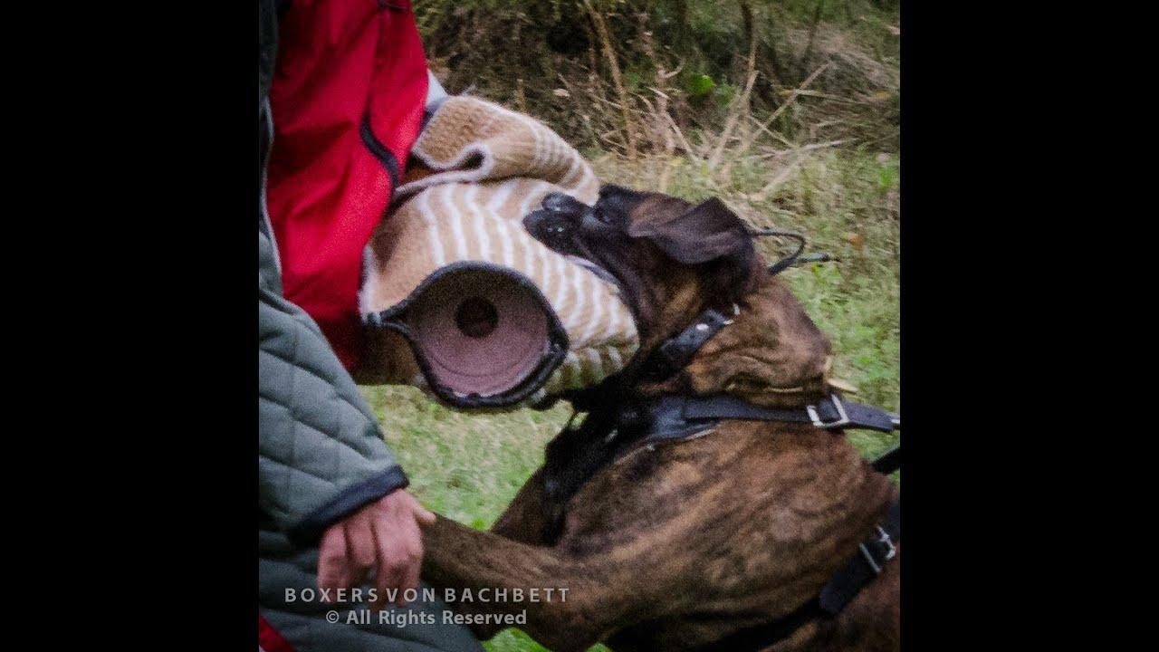 Boxer Dog Police Dog