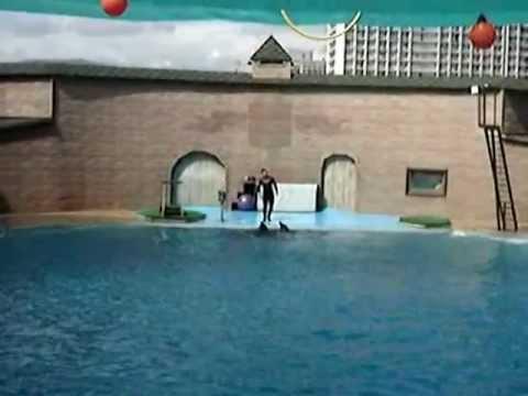 Дельфинарий в Сочи (Адлер, Курортный городок)