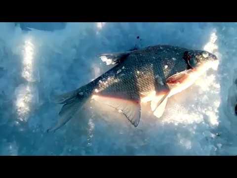 все о рыбалке на леща видео на урале