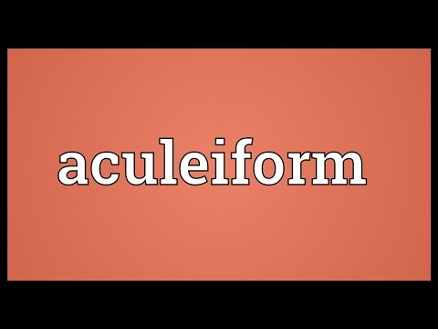 Header of Aculeiform