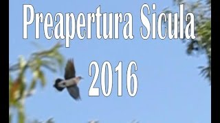 "CACCIA: Preapertura Sicula 2016 "" The open day"" dove hunting-NINACC HIUNT"