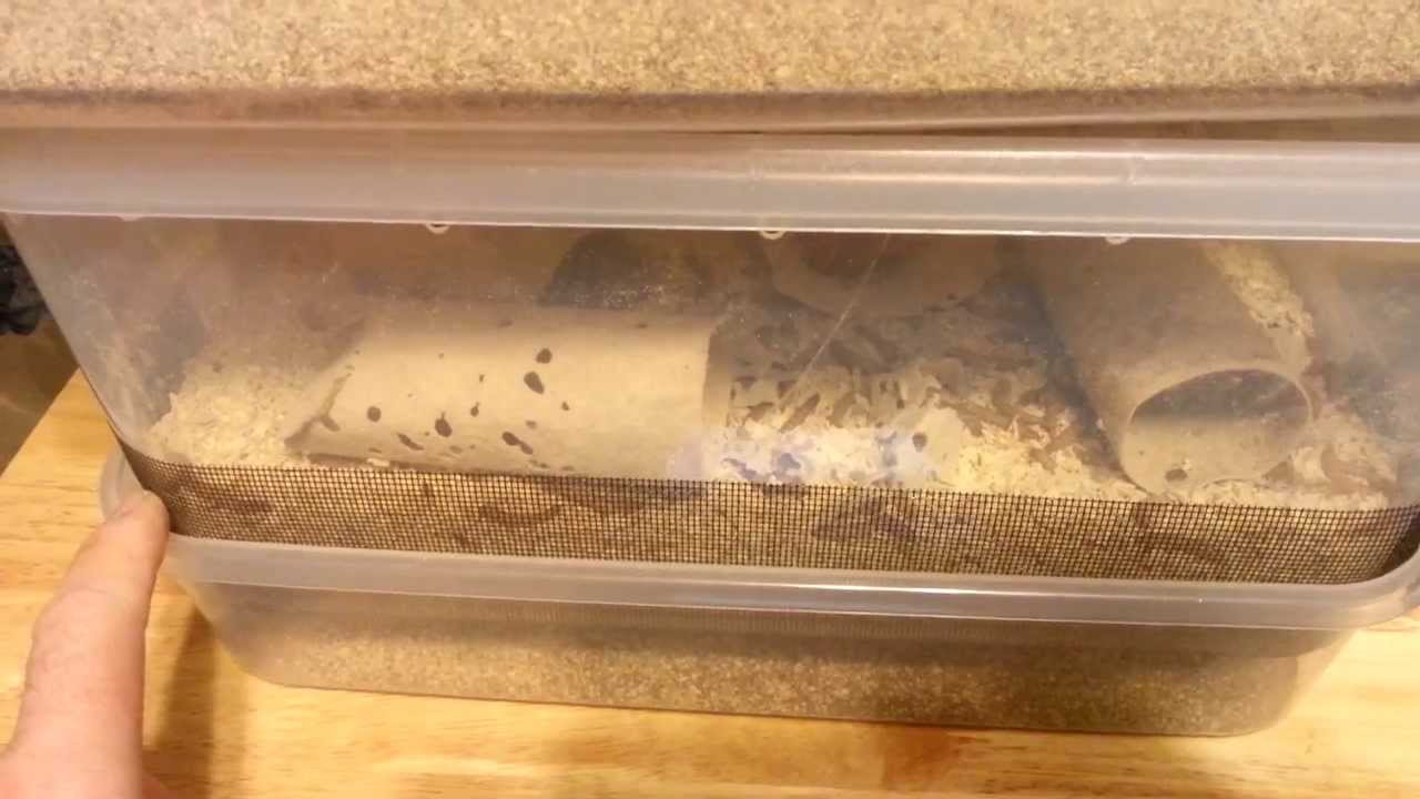 Self Cleaning Mealworm Bins New Idea How To Part 8