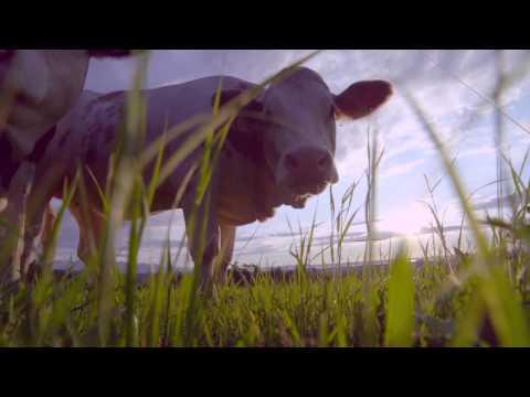Future Farmers of America - FFA