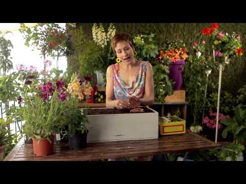 Sabines Gartenschule: Blumen Säen