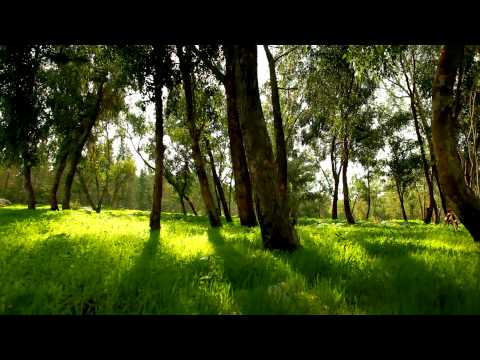 Stock Footage of Mount Tabor forest in Israel.