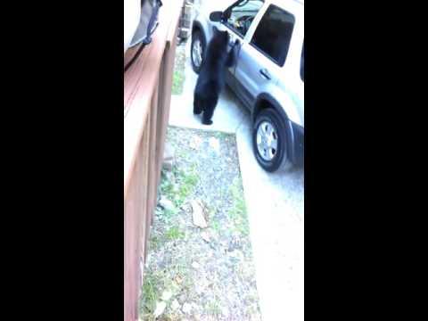 賢い熊!?家の前に遊びに来た熊が取った行動とは?