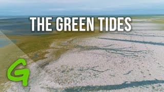 "The reality behind industrial meat: ""the green tides"""