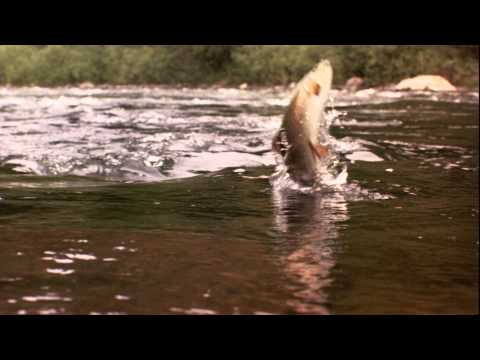 A River Runs Through It - Trailer