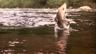 A River Runs Through It (1992) - Official Trailer