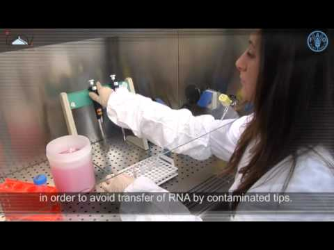 Total RNA extraction