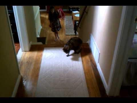 Gatos - Gato asustadizo y saltarín