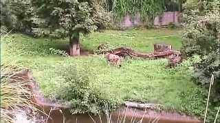 Auf grosser Tour durch den Koelner Zoo 2