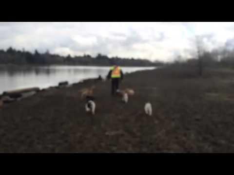 "Woofer Walk: Monday Morning ""Munchkin March"" Woofer Walkers: Jezebel & Jovanna"