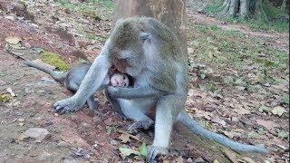 OMG ! Crazy Monkey Mother Do Very Bad On Baby Monkey Amara