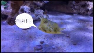 baby cowfish and seahorse