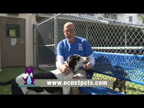 Orange County Animal Services - I Volunteer Because . . . Ken