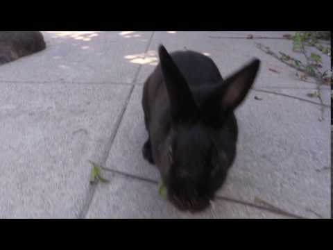 Bunny Crush thumbnail